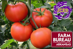 Farm Bureau Tomato Project!